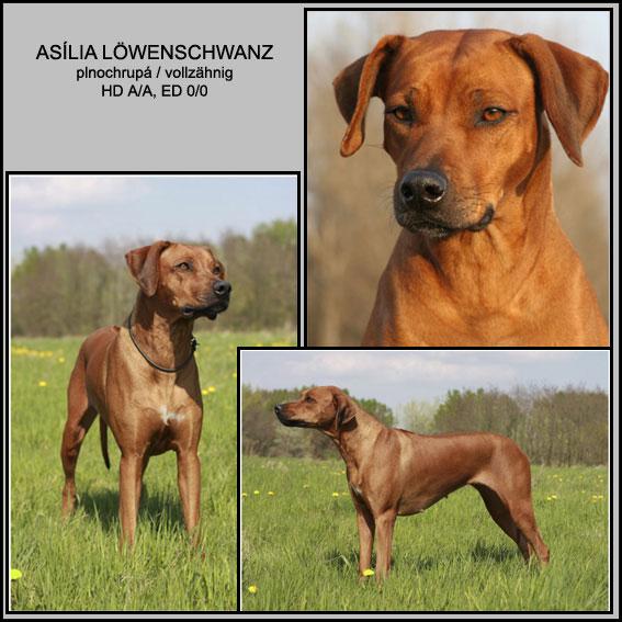 Asilia-web