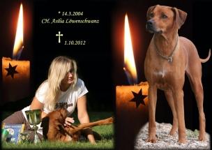 Asilka 1-10-2012