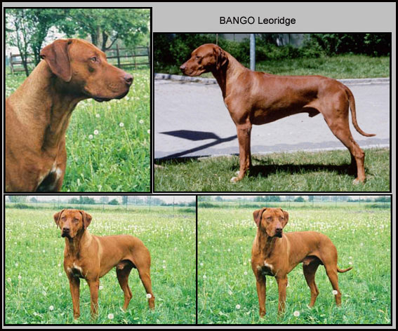 Bango2-web
