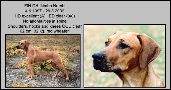 Ikimba-Nambi-copy-web