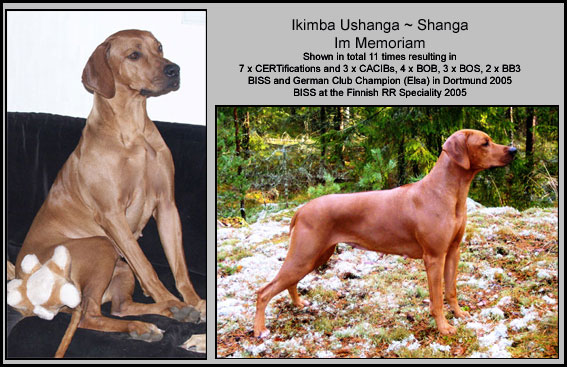 Ikimba-Ushanga-copy-web