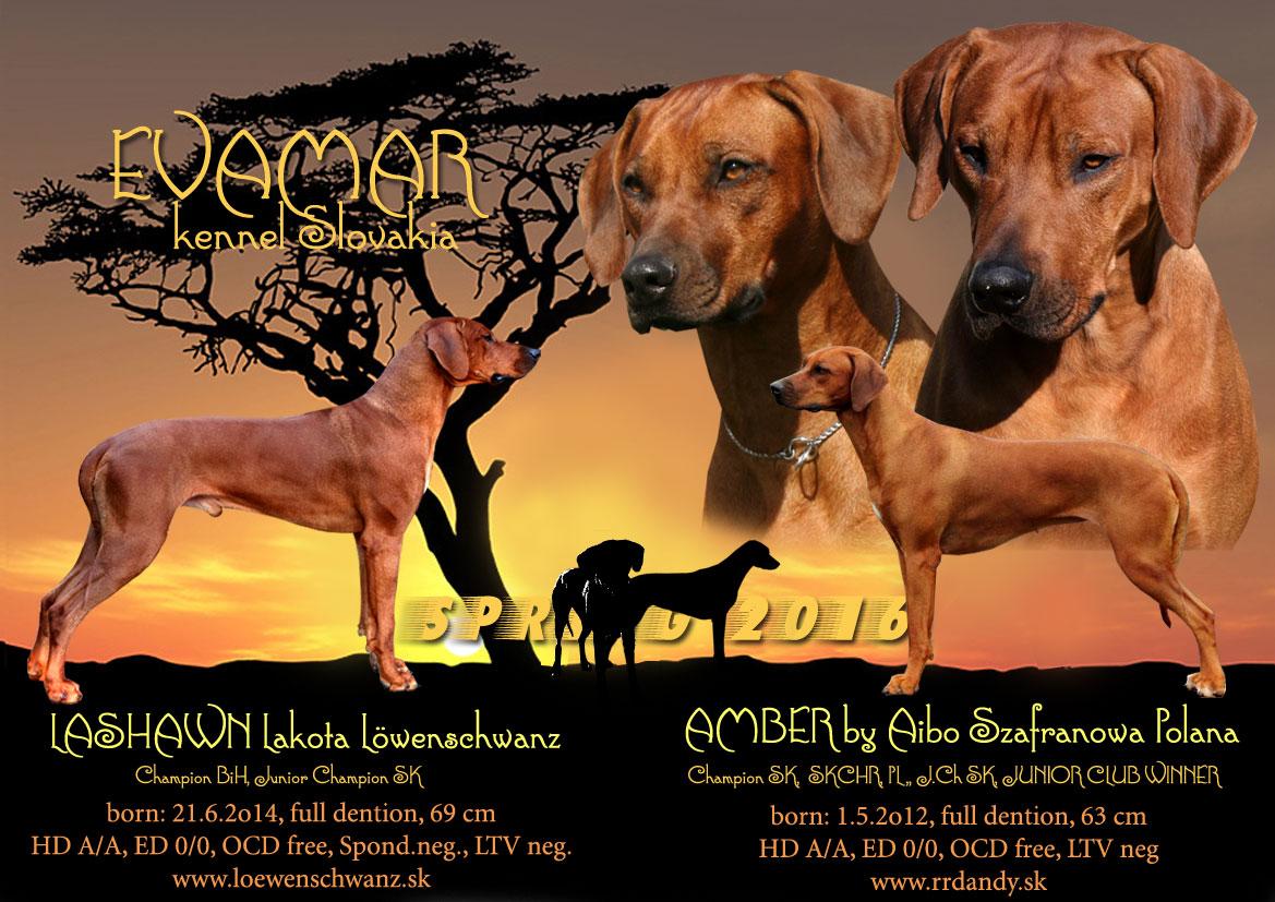 Adela-a-Lashawn-afrikaweb