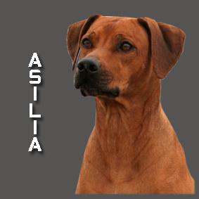 Asilia 2