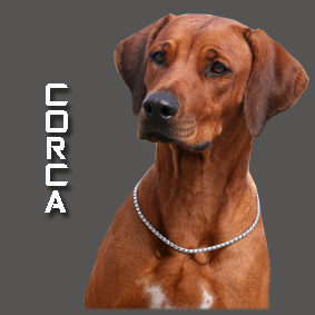 CORCA 2 copy