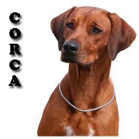 CORCA 2018 copy