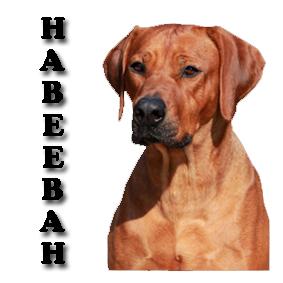 Habeebah 2018 copy