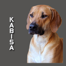 KABISA 2