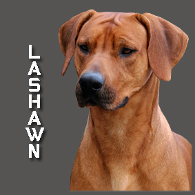 LASHAWN