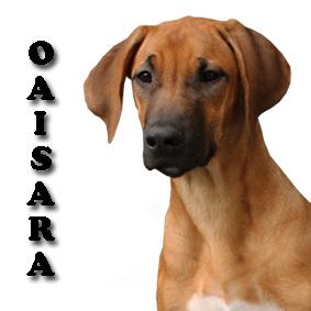 OAISARA 2018 2 copy